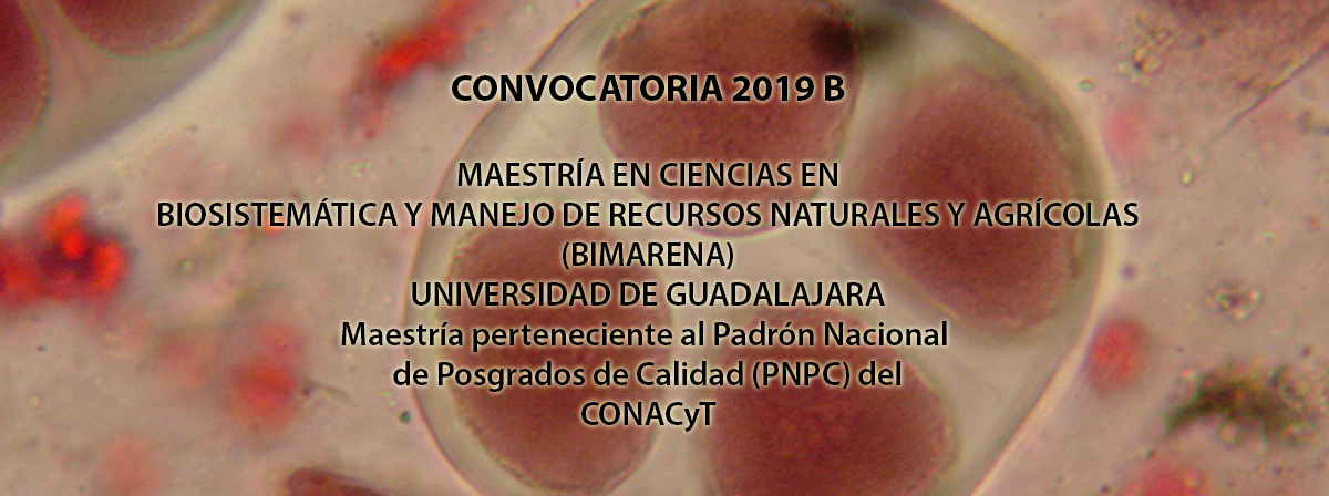convocatoria 2019B